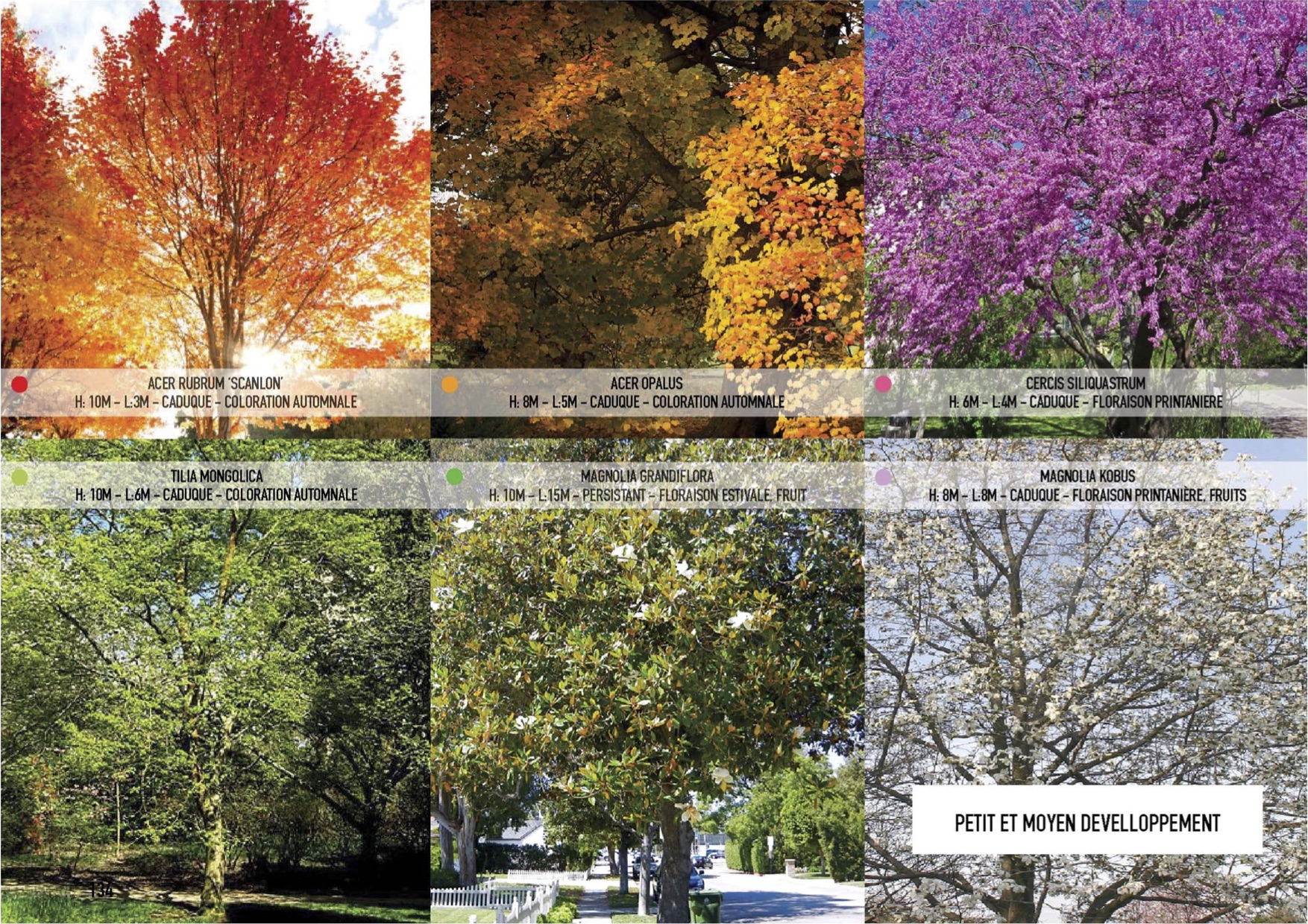Bientôt 2000 arbres & arbustes à BastideNiel