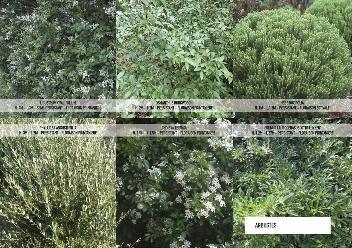 Plus de 4000 arbres et arbustes à BastideNiel