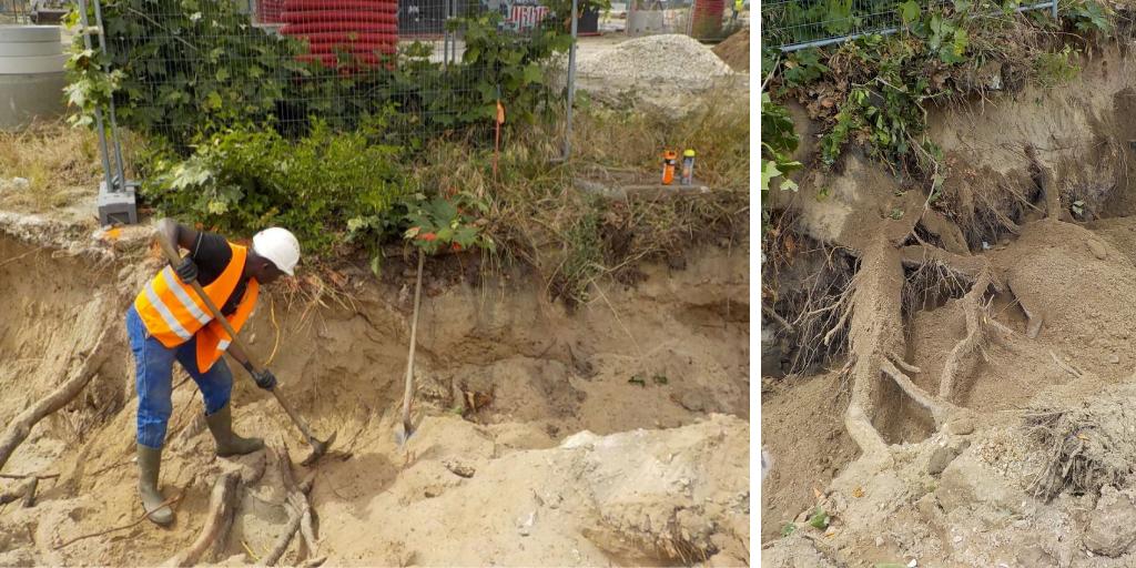 BastideNiel:le chantier de canalisations préserve les arbres patrimoniaux